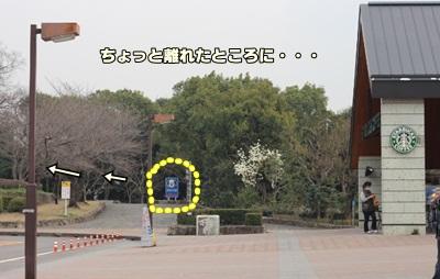 naga8.jpg