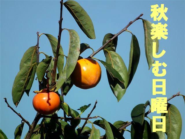 自宅になる柿