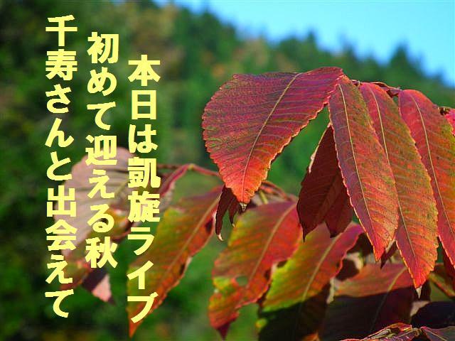 迎えた2012秋