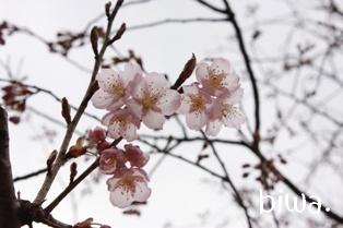 春がきたね。