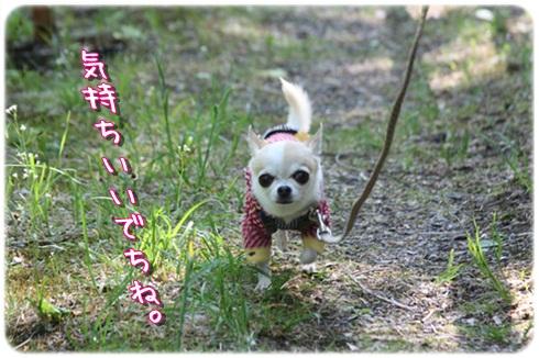 039_20120621201930.jpg