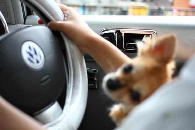 ななは運転席が大好き!
