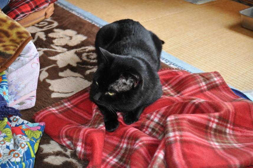 DCさんの黒ネコさん