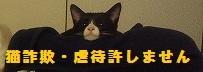 猫詐欺防止