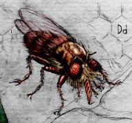Murderous-fly.jpg