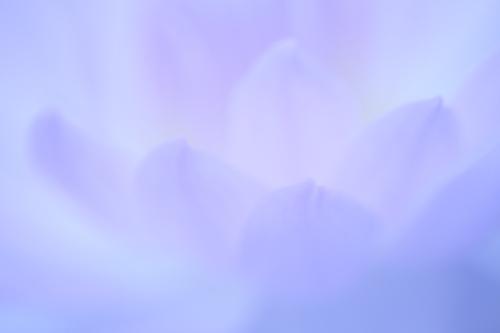 IMG_3652-01.jpg