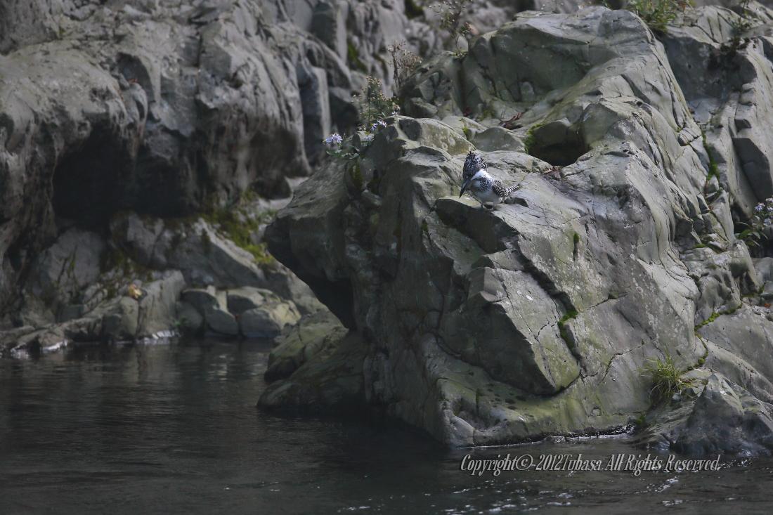 20121025-AA1P46252012-10-24