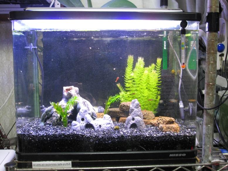 2014年熱帯魚3