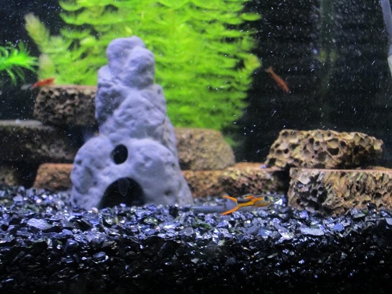 2014年熱帯魚2