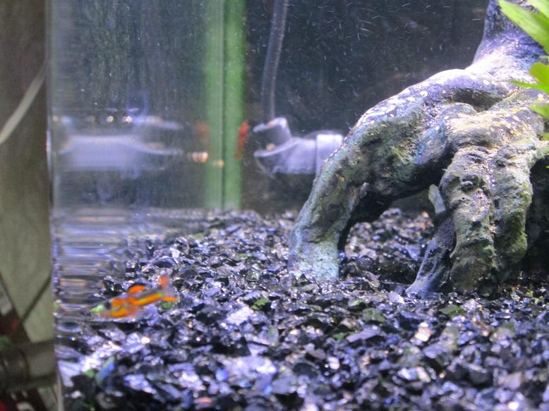 2014年熱帯魚1