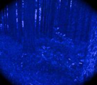 2012森の住人スピリッツ