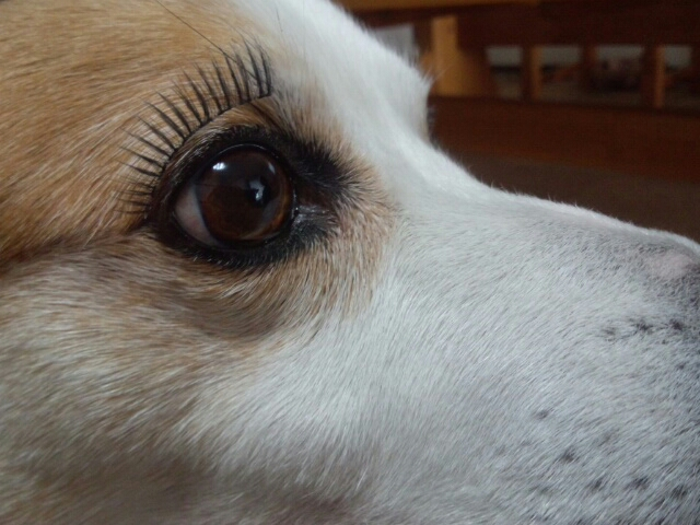 These Dogs And Cats With Fake Eyelashes Are Hilariously Adorable