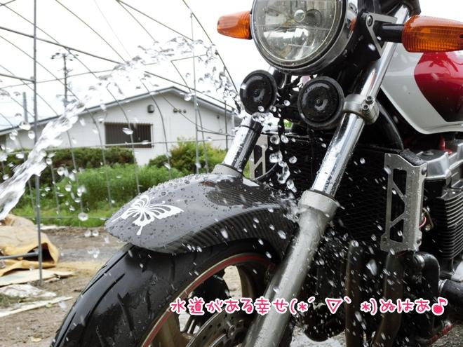 CIMG0445.jpg