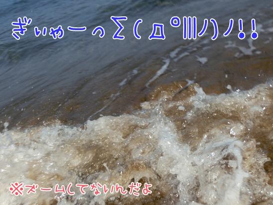 CIMG9982.jpg