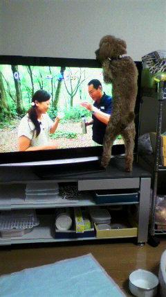 2011072816080000 テレビから犬の鳴き声が