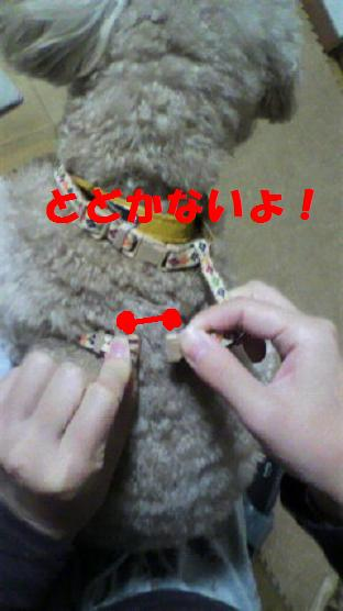 2012112920190000.jpg