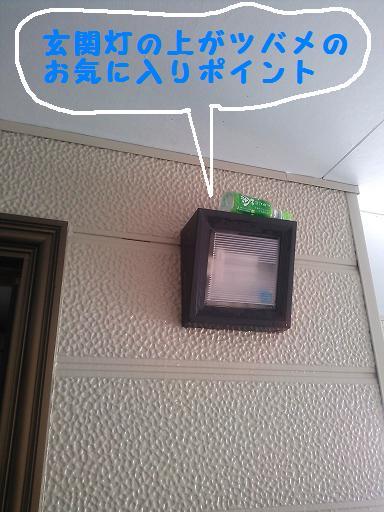 DSC_2386.jpg