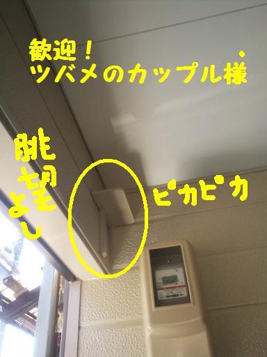 DSC_2387.jpg