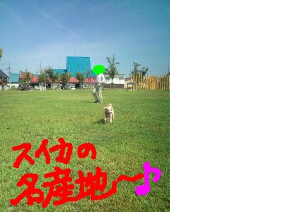snap_25pico_201296115140.jpg