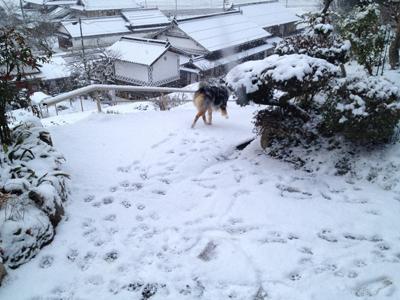 2013yukino kaito