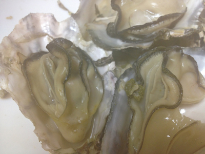 日生の牡蠣