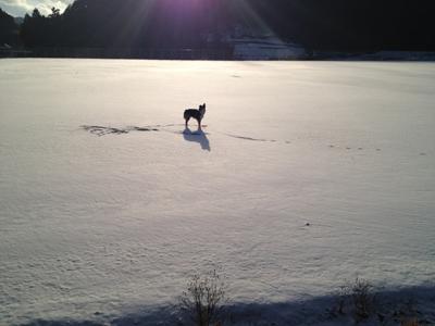海渡雪の中