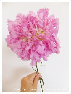 flower20120428_3.jpg