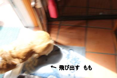 kXbi01GzfU6gxSm1368584861_1368584885-1.jpg
