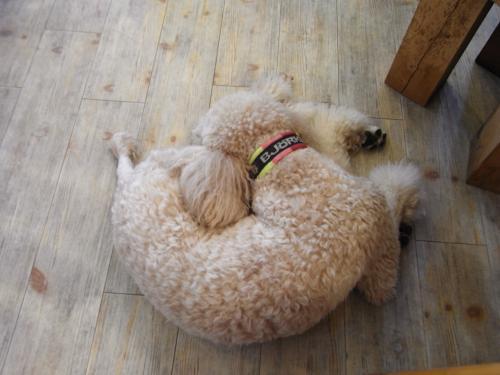 後ろ犬寝姿縮小