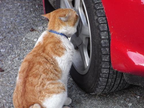 後ろ猫縮小