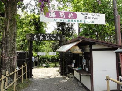 kasugafuji9