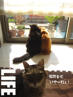 image_20130124194514.jpg