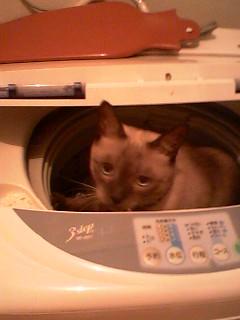 binn洗濯機