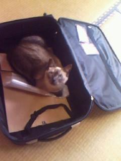 スーツケース_0001