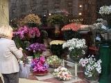 マダムと花屋