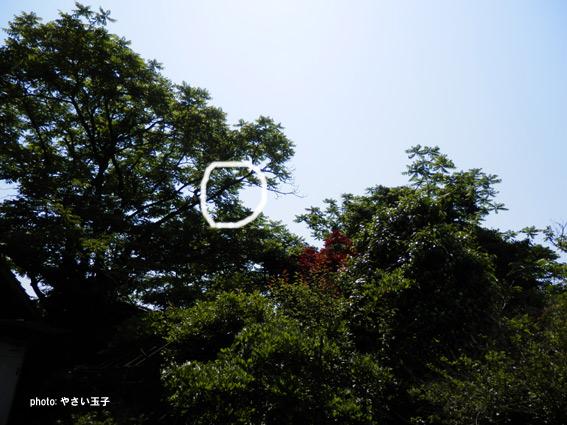 P5220230.jpg