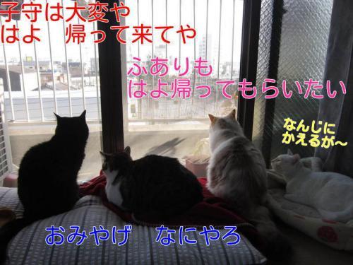 7v6FlpFuS55jlIl1365523559_1365524141.jpg