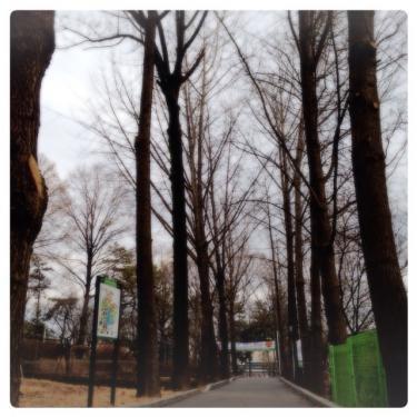 語学堂近くの通りも冬の雰囲気。季節毎に同じ通りでも雰囲気が異なります^^