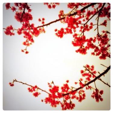 一足先に沖縄に訪れた春。