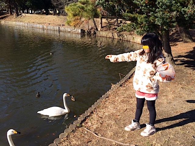 1222白鳥2