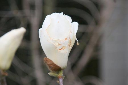 2013-03-26_22.jpg