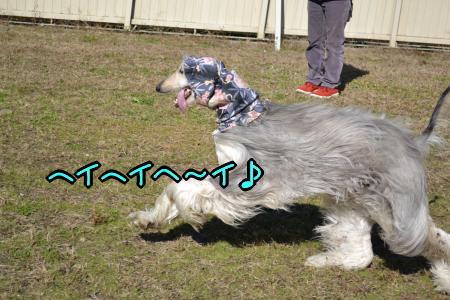 DSC_0161_convert_20121126200445.jpg