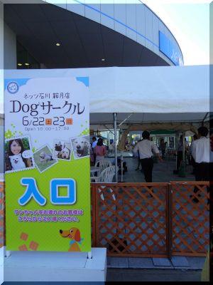 DSC04860.jpg