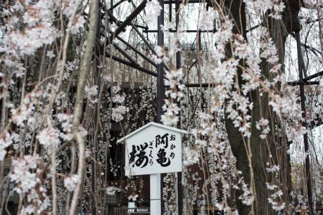 2013_kyoto_sakura12.jpg