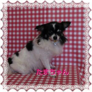 たまちゃん10・3