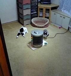 猫部屋&談話室