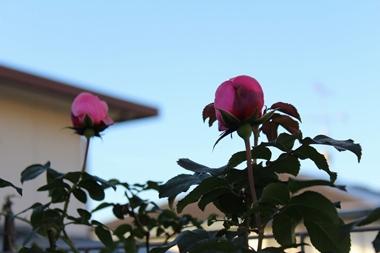 2014-11-14IMG_0031.jpg