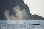 最後は大人のクジラが締めてくれました(2014/1/3 二見港)