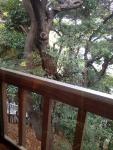 愛宕 TOKYO Trattoria T 店からの眺め(出世の石段)
