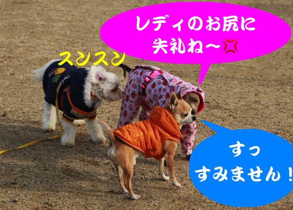 IMG_1632_convert_20141217183858.jpg